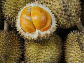 durian-durian