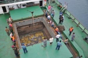 捕獲されたサメとデッキ -海洋水産省サイト-